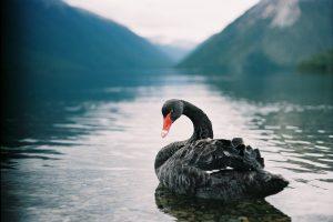 Three Black Swans | BullionBuzz